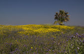 Uncultivated flowers in the spring field.Spring in Israel. — Stock Photo