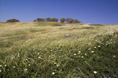 Uncultivated flowers in the spring field — Stock Photo