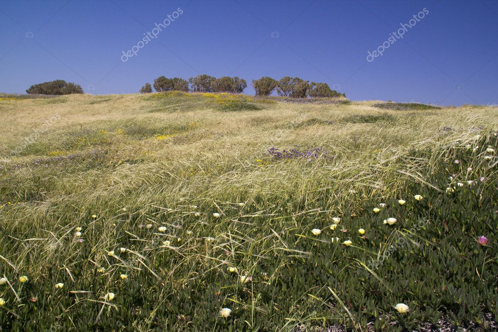 Uncultivated flowers in the spring field.Spring in Israel.  Stock Photo #5578390