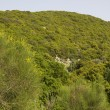 View to Mount Meron in spring.Peak trail,Israel — Stock Photo