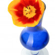 Tulip flowers in a blue glass vase, isolated. — Stock Photo