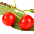 One branch with green leaf and red cherrys — Stock Photo