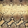 Snake texture. - Stok fotoraf