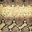 Snake texture. - Stock Photo