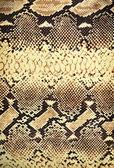 Snake texture. — Stock Photo