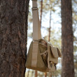Foto Stock: Shoulder bag hanging on pine tree