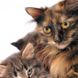 Cats family — Stock Photo