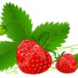 Red strawberry fruits with green leafs vector illustration - Stock Vector