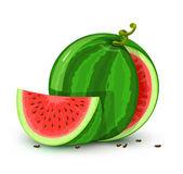 Frutos de melão de água vector isolados no branco — Vetor de Stock