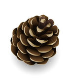 Vector pine cone isolated — Stock Vector