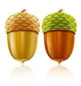 Vector acorn nuts — Stock Vector