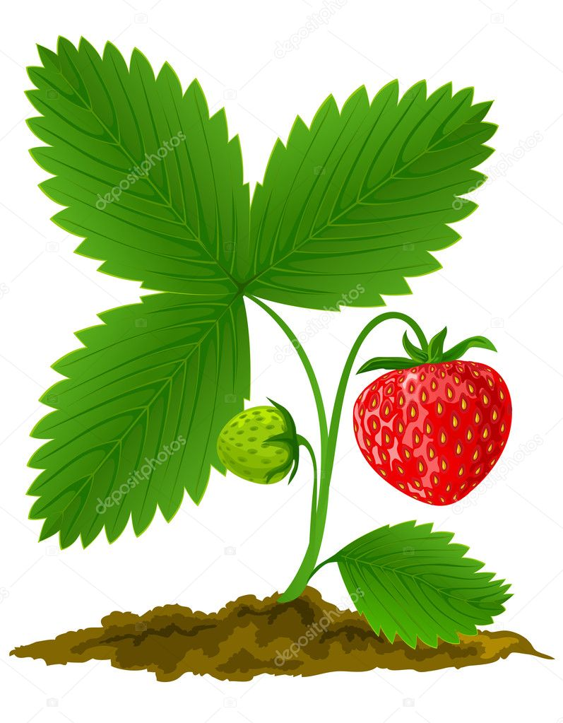 red strawberry fruit with green leafs stock vector. Black Bedroom Furniture Sets. Home Design Ideas