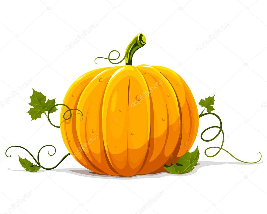 Vector pumpkin vegetable fruit isolated on white background — Stockvektor #5782349