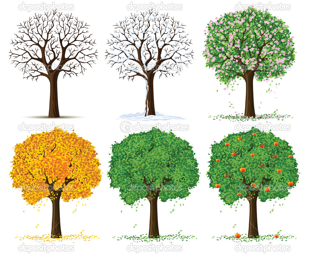 Vector silhouette of autumn, spring, summer and winter season tree isolated on the white background — Stock Vector #5783525