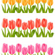 Colour tulip flowers set - Stock Vector
