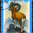 Stock Photo: AFGHANISTAN - CIRCA 1984 Argali