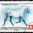 BULGARIA - CIRCA 1980 Arab Horse - Photo