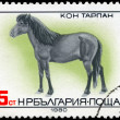 BULGARIA - CIRCA 1980 Tarpan Horse - Photo
