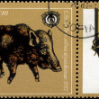 BULGARIA - CIRCA 1981 Boar - Photo