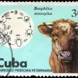 Royalty-Free Stock Photo: CUBA - CIRCA 1975 Cow