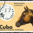 Royalty-Free Stock Photo: CUBA - CIRCA 1975 Horse