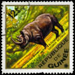 GUINEA - CIRCA 1975 Black rhino — Stock Photo