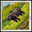 Royalty-Free Stock Photo: GUINEA - CIRCA 1975 Buffalo
