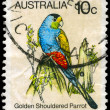 AUSTRALIA - CIRCA 1980 Golden shouldered Parrot — Stock Photo