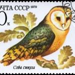 USSR - CIRCA 1979 Barn Owl — Stock Photo #6230986