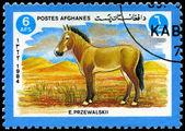 AFGHANISTAN - CIRCA 1984 Przewalski's Horse — Stock Photo