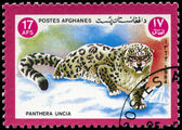 AFGHANISTAN - CIRCA 1984 Snow leopard — Stock Photo