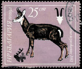 BULGARIA - CIRCA 1981 Roedeer — Stock Photo