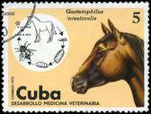 Küba - 1975 at yaklaşık — Stok fotoğraf