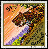 GUINEA - CIRCA 1975 Leopard — Stock Photo