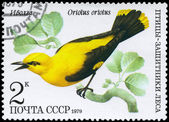 USSR - CIRCA 1979 Oriole — Stock Photo