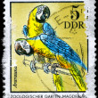 GDR - CIRCA 1975 Macaws — Stock Photo