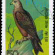 Royalty-Free Stock Photo: VIETNAM - CIRCA 1982 Black Kite
