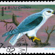 VIETNAM - CIRCA 1982 Black-winged Kite — Stock Photo