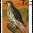 VIETNAM - CIRCA 1982 Short-toed Eagle — Stock Photo