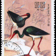 VIETNAM - CIRCA 1983 Black Stork — Stock Photo