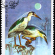 vietnam - circa 1983 night heron — Stock Photo