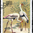 Stock Photo: VIETNAM - CIRCA 1983 Painted Stork