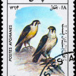 AFGHANISTAN - CIRC1985 Falcons — Stock Photo #6258055