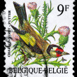 BELGIUM - CIRCA 1985 Goldfinch — Stock Photo