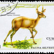 Royalty-Free Stock Photo: CUBA - CIRCA 1970 Deer