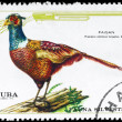 CUBA - CIRCA 1970 Pheasant — Stock Photo
