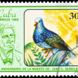 CUBA - CIRCA 1986 Quail-dove — Stock Photo