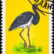 MONGOLIA - CIRCA 1985 Black Stork — Stock Photo