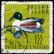 Stock Photo: POLAND - CIRC1964 Shoveler