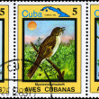 Royalty-Free Stock Photo: CUBA - CIRCA 1983 Cuban Birds